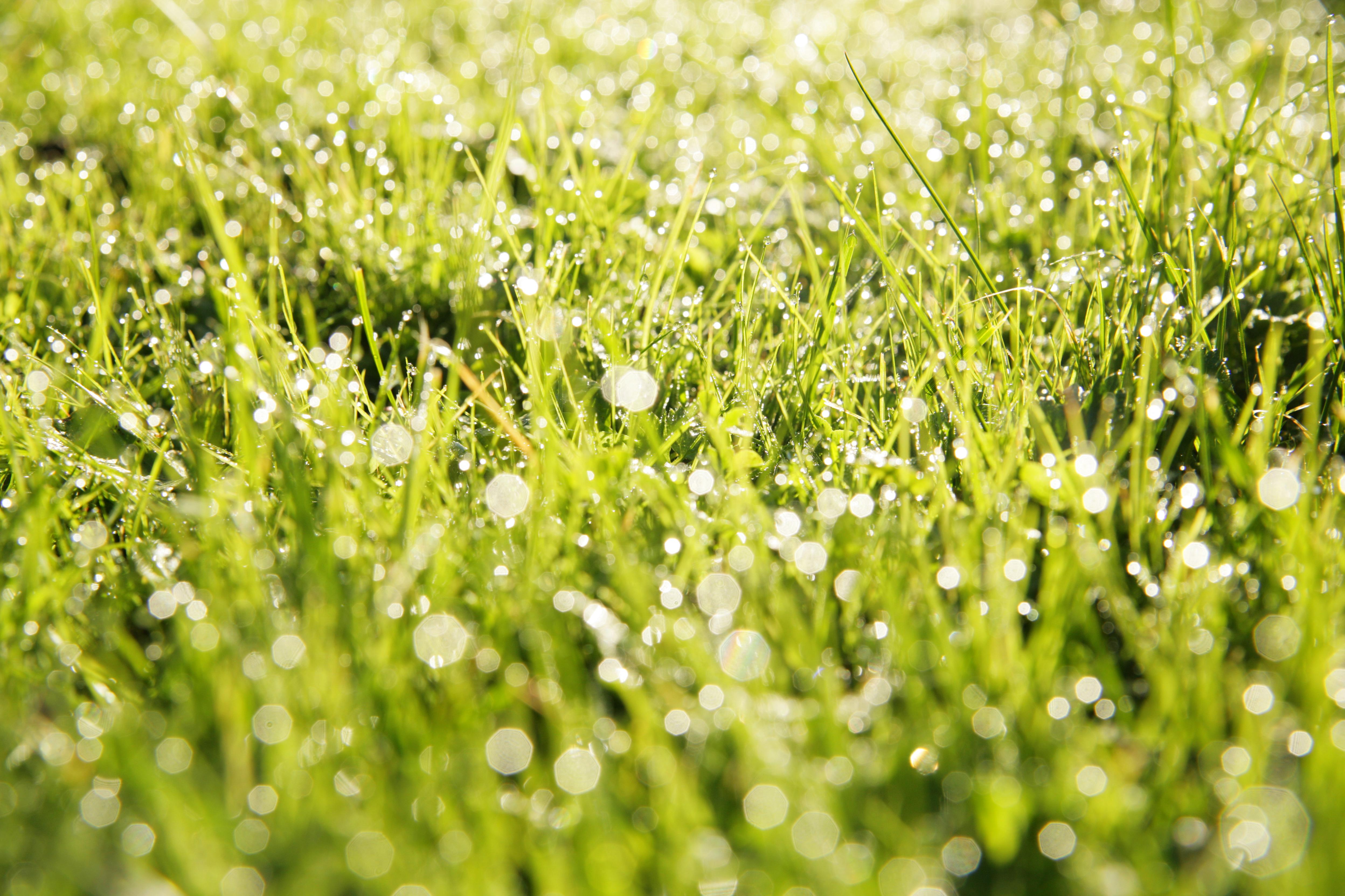 Closeup of grass in field